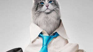 """Nine Lives"": ""House of Cards""-Star Kevin Spacey als Katze! (Video)"
