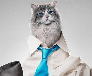 """""""Nine Lives"""": """"House of Cards""""-Star Kevin Spacey als Katze! (Video)"""