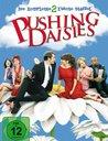 Pushing Daisies - Die komplette zweite Staffel Poster