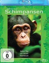 Schimpansen Poster