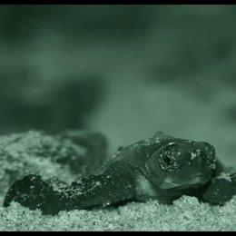 Frisch geschlüpfte Schildkröten - Szene Poster