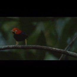 Die Eitelkeit der Vögel - Szene