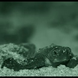 Frisch geschlüpfte Schildkröten - Szene