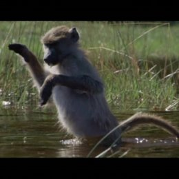 Die Affen waten durch das Wasser - Szene