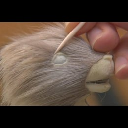 Andersons Mr. Fox - Featurette