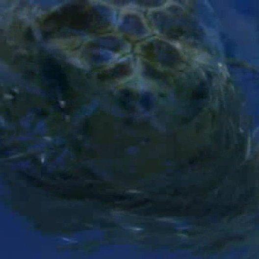 Tortuga - Die unglaubliche Reise der Meeresschildkröte (BluRay-/DVD-Trailer) Poster