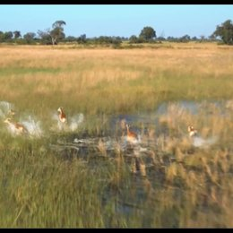 African Safari 3D (VoD-/BluRay-/DVD-Trailer)