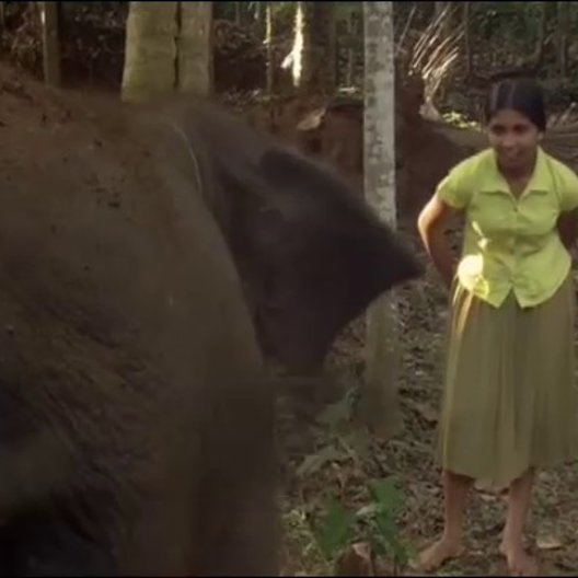 Chandani und ihr Elefant - Trailer Poster