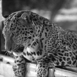 Leoparden küßt man nicht - Trailer