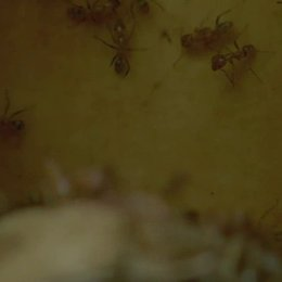 Der Ameisenbaum - Szene Poster