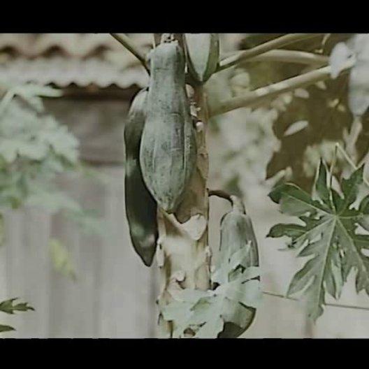 Der Duft der grünen Papaya - Trailer Poster