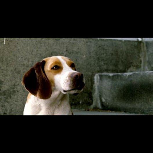 Underdog - Unbesiegt weil er fliegt - Trailer Poster