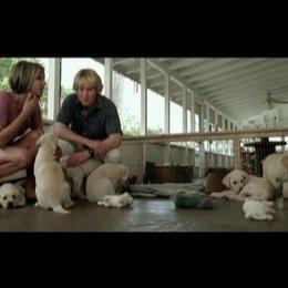 Hundewelpen - Szene