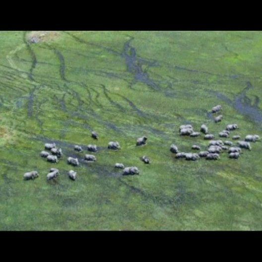 Schwimmende Elefanten - Szene Poster