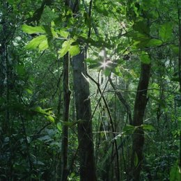 Der Moabi Baum - Szene Poster