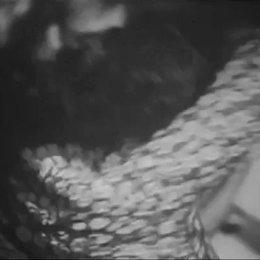 Daniel Schmid - Le chat qui pense - Trailer