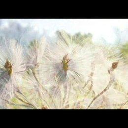 Die Geheimnisse der Spiderwicks - Trailer