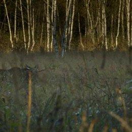 Der Wald wird zurückgedrängt - Szene