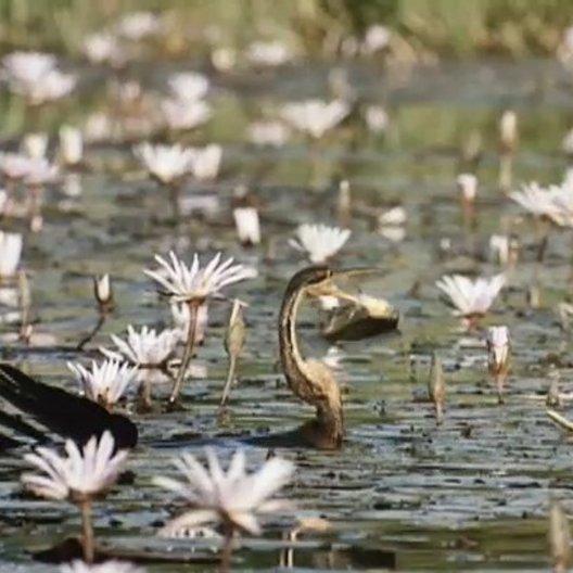 Nomaden der Lüfte - Das Geheimnis der Zugvögel - Trailer