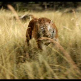The Jungle Book - Filmtipp