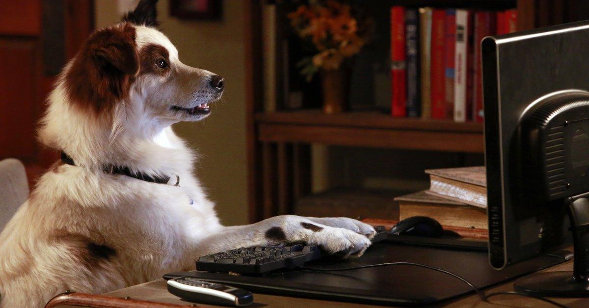 Hund Mit Blog Serien Stream