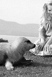Das Geheimnis des Seehundbabys