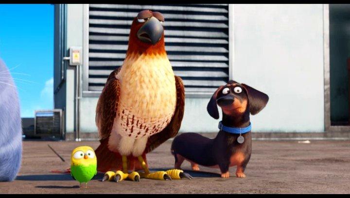 Die Haustiere nehmen den Geheimweg - Szene Poster