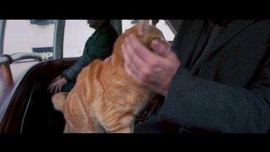 Bob, der Streuner Trailer