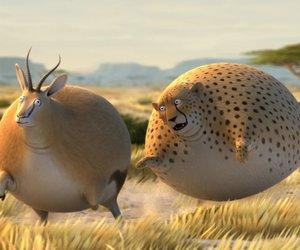 Wenn Tiere plötzlich dick werden - Diese 8 Videos versüßen euch den Tag