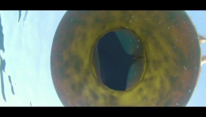 Piranha 3D - Trailer Poster