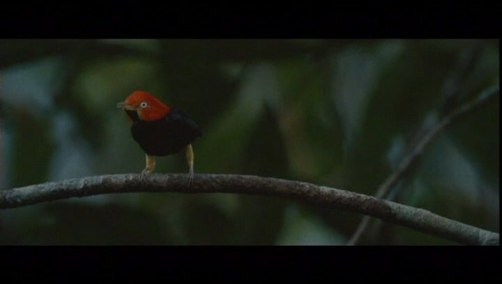 Die Eitelkeit der Vögel - Szene Poster