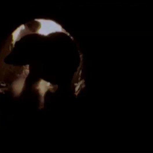 Wächter der Wüste (DVD-Trailer) Poster