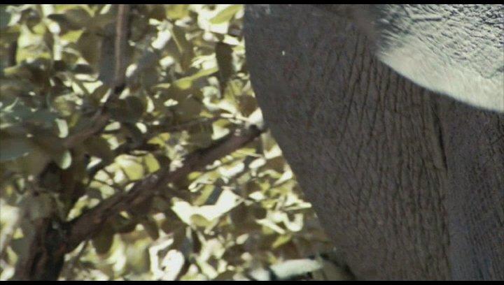 Lava auf Hawaii vs Elefanten in Botswana - Szene Poster
