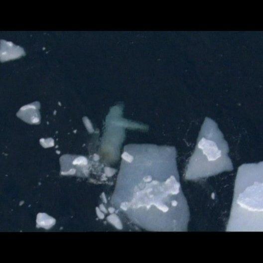 Ein einsamer Eisbär im arktischen Eis - Szene Poster