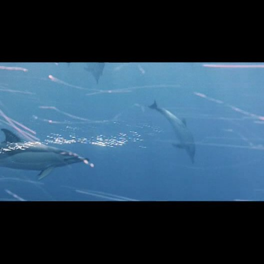 Delfine unter Wasser - Szene Poster