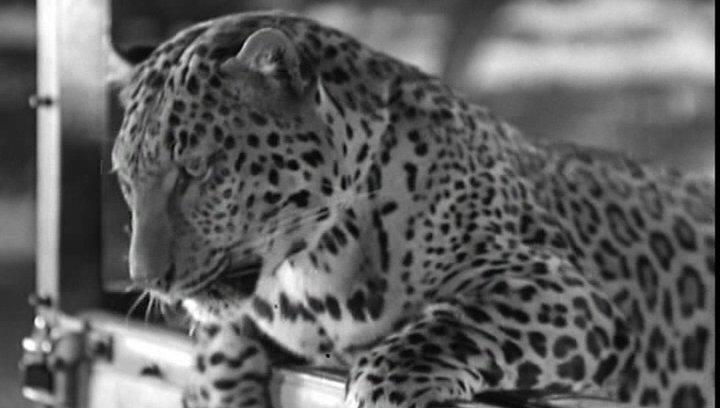 Leoparden küßt man nicht - Trailer Poster