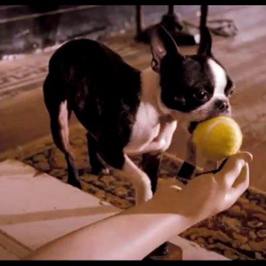 Das Hundehotel - Trailer Poster