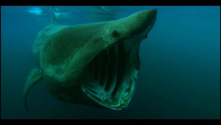 Tortuga - Die unglaubliche Reise der Meeresschildkröte - Trailer Poster