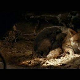 Der Fuchs und das Mädchen (HD-DVD-/Blu-Ray-/DVD-Trailer) Poster
