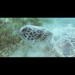 Meeresschildkröten - Szene Poster