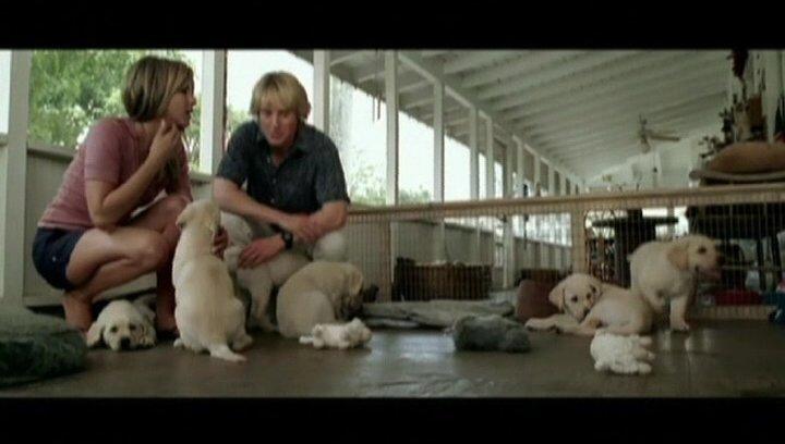 Hundewelpen - Szene Poster