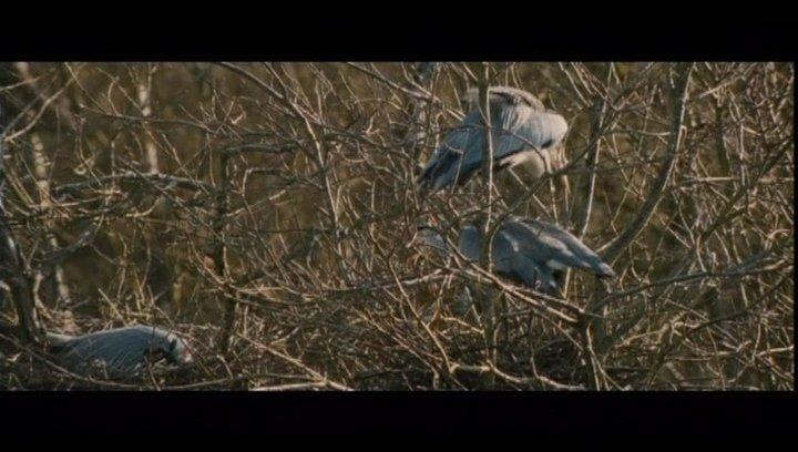 Die Liebe unter Vögeln - Szene Poster