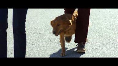 Bailey - Ein Freund fürs Leben Trailer