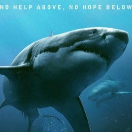 """""""In the Deep""""-Trailer: Blutrünstige Haie eröffnen im Horror-Thriller die Menschenjagd"""