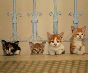 """""""Kedi"""": Putziger Katzen-Film wird zu einem überraschenden Erfolg (Trailer)"""