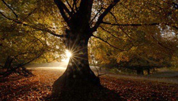 Unser Wald - Das grüne Wunder - Trailer Poster