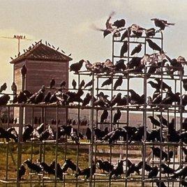 Wie bei Alfred Hitchcock: Vögel attackieren Frau in Berlin!