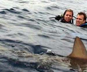 """""""Open Water 3"""": Der Hai-Horror geht weiter & liefert uns einen ersten Trailer"""