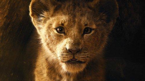 eine löwin interessiert es nicht was schafe über sie denken