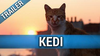 Kedi - Von Katzen und Menschen Trailer